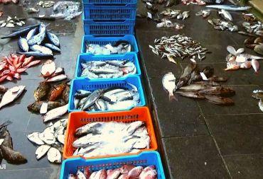 """""""المشهد"""" تزور مزاد السمك في بانياس لرصد الحركة الشرائية ونقل هموم الصيادين (فيديو)"""