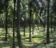 بولندا تدعو لزراعة غابات في أنحاء العالم لتحسين امتصاص انبعاثات الكربون