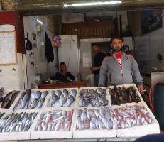 حكايا السمك يرويها المزاد العلني في جبلة (فيديو)