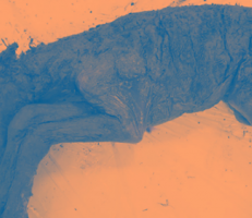 استنساخ حصان منقرض عمره 42 ألف عام