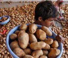 """شركة بيبسي تقاضي 4 مزارعين هنود بسبب""""البطاطا"""""""