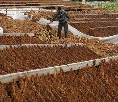 مؤسسة التبغ تنفي رفع أسعار منتجاتها