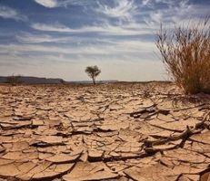 """""""في اليوم العالمي لمكافحة التصحر"""" سورية تنفذ مشروعين للحد منه"""