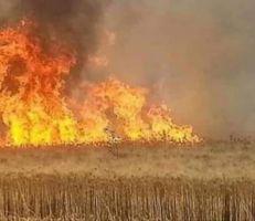 الحكومة تدرس آلية تعويض الحرائق للمزارعين
