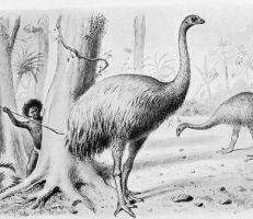 """اكتشاف """"أول طائر عملاق"""" في جزيرة القرم"""