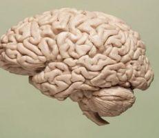 إنجاز رائد في علاج شيخوخة الدماغ