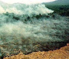 عشرات الحرائق في البرازيل تحول الغابات المطرية في الأمازون إلى رماد (صور)