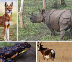 """دراسة: أزمة انقراض  الحيوانات """"تشكل تهديداً وجودياً للحضارة"""""""
