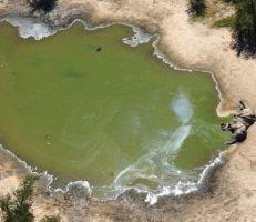 العثور على أكثر من 350 جثة فيل في بوتسوانا خلال شهرين فقط