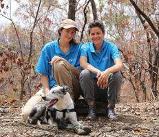 الكلب (بير) يقود جهود إنقاذ الكوالا من حرائق الغابات الأسترالية