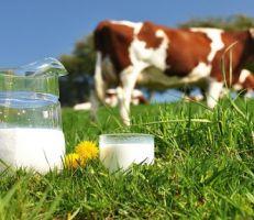 """محمد سكر للمشهد أونلاين: لا يزال سعر الصرف يتحكم بإنتاج الحليب ومشتقاته والكهرباء """" عمتنا"""""""