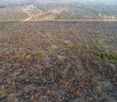 حرائق في الغابات المطرية في الأمازون