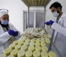 صابون حليب الحمار يثير الجدل في الأردن