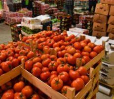 رئيس مجلس إدارة غرفة زراعة دمشق: التصدير ليس فقط تجميعاً للمواد وتصديرها