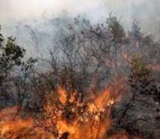 إجراءات احترازية للحد من الحرائق في محافظة اللاذقية