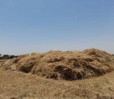 تحديد أجور حصاد ونقل القمح بدير الزور