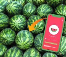 """""""تطبيق بطيختي"""" الابتكار الأغرب في عالم التكنولوجيا"""