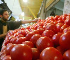 ارتفاع أسعار البندورة في الأسواق سببه التصدير إلى العراق..