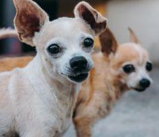 اللاذقية: مطالبات بفرض ضرائب على الكلاب البرجوازية