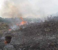 حريق يأتي على ٤٠ دونماً من الزيتون في ريف القرداحة