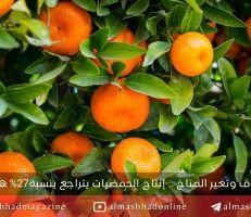 توقعات بتراجع إنتاج سوريا من الحمضيات بنسبة 27٪ هذا الموسم