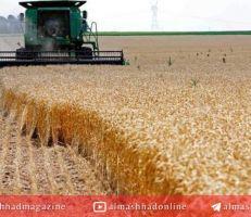 """""""الزراعة"""" تضع الخطة الزراعية للموسم القادم ."""